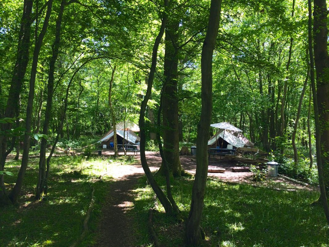 Wild Boar Wood - Adventure Campsites
